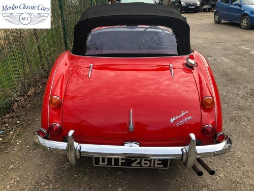 Austin Healey For Sale 5